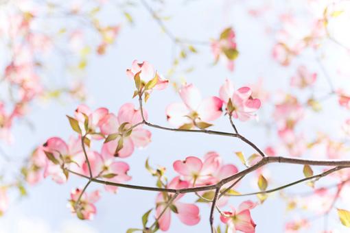 pink flowers blooming in spring